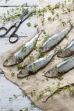 Fresh sardines raw fish with coarse salt and thyme on brown paper on rustic wooden vintage Stock Photos