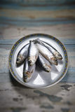Fresh sardines Stock Images