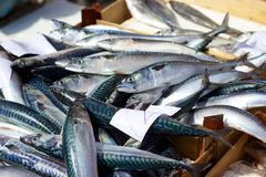 Fresh sardines for sale in Catania, Sicily, Italy Royalty Free Stock Images