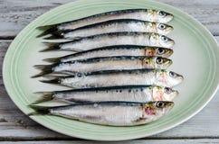 Fresh sardines Stock Image