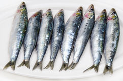 Fresh sardines Stock Photo