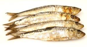 Fresh sardines on white background Stock Photography