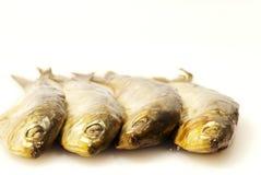 Fresh sardines on white background Royalty Free Stock Image