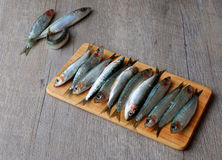 Fresh sardines on wooden board. Image of fresh sardines aligned on a wooden board Stock Photography