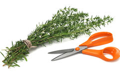 Fresh Savory. And gardening scissors, isolated on white background Stock Photography