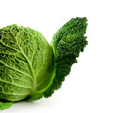 Fresh savoy cabbage Stock Image