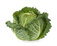 Fresh savoy cabbage Royalty Free Stock Image