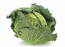 Free Fresh Savoy Cabbage Royalty Free Stock Photography - 4363737