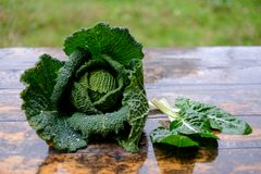 Fresh savoy cabbage and chard Royalty Free Stock Photos