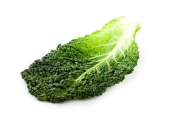 Fresh savoy cabbage leaf Stock Image