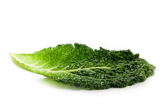 Fresh savoy cabbage leaf Royalty Free Stock Photography