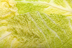 Fresh savoy cabbage leaf Stock Photos