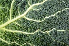 Fresh savoy cabbage leaf Royalty Free Stock Photography