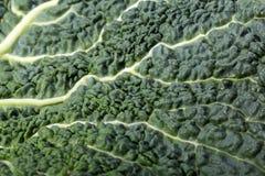 Fresh savoy cabbage leaf Stock Images