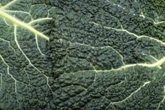 Fresh savoy cabbage leaf Stock Photo