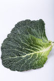 Fresh savoy cabbage leaf Royalty Free Stock Photo