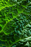 Fresh savoy cabbage leaf Stock Photo