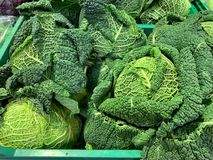 Fresh savoy cabbage. Ready for cooking. stock images