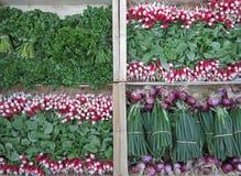 Fresh scallion, radish and parsley. Bunch of fresh scallion, radish and parsley, in the Greengrocery Stock Image