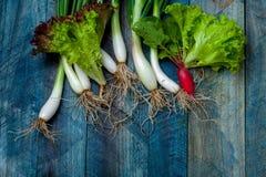 Fresh scallions radish and lettuce. Fresh scallions red radish and lettuce green leaves on blue wooden table background Royalty Free Stock Images