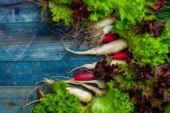 Fresh scallions radish and lettuce. Fresh scallions red radish and lettuce green leaves on blue wooden table background Royalty Free Stock Photo