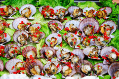 Fresh scallop Stock Images