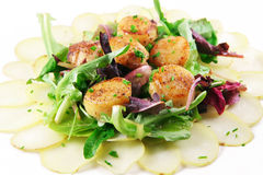 Fresh Scallop Salad Stock Images