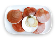 Fresh scallop and white background. stock photo