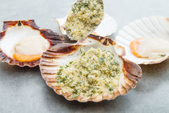 Fresh scallops au gratin with bread and parsley Royalty Free Stock Photo