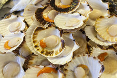 Fresh scallops on fish market Stock Image