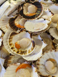 Fresh scallops on fish market Stock Images