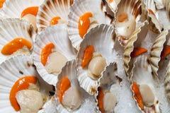 Fresh scallops on market stall Stock Image