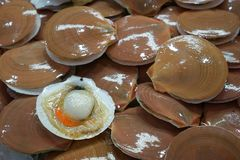 Fresh Scallops for sale in the market at Thailand. Too soft, fresh Scallops for sale in the market at Thailand. Scallops abstract background Stock Images