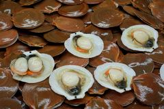 Fresh Scallops for sale in the market at Thailand. Too soft, fresh Scallops for sale in the market at Thailand. Scallops abstract background Stock Photo