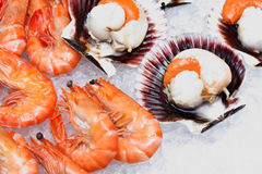 Fresh Scallops and Shrimps over Ice Stock Photography