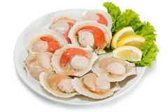 Fresh scallops in the wings for cooking. In plate. From a series of Food Korean cuisine Royalty Free Stock Photography