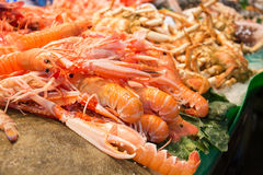 Fresh scampi Stock Photo