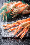 Fresh scampi on ice Stock Images