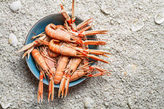 Fresh scampi served on the beach in a blue bowl royalty free stock photo