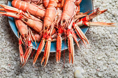 Fresh Scampi Served On The Beach Royalty Free Stock Photos
