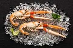 Fresh scampi shrimp on ice on a black stone table Royalty Free Stock Images