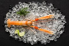 Fresh scampi shrimp on ice on a black stone table Stock Photo