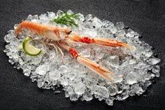 Fresh scampi shrimp on ice on a stone table. Fresh scampi shrimp on ice on a black stone table Stock Photos