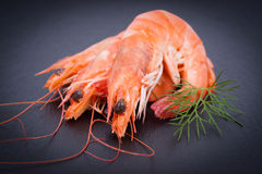 Fresh scampi Royalty Free Stock Image