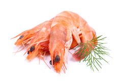 Fresh scampi Royalty Free Stock Photo