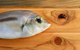 Fresh Scolopsis monogrammafish. Seafood fresh Scolopsis monogrammafish on wooden in sunlight time made light and shadow Royalty Free Stock Images