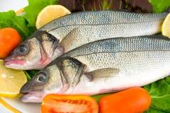Fresh sea bass Stock Photos