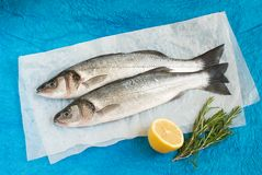 Fresh sea bass Stock Images