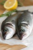 Fresh sea bass stock image