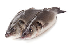 Fresh sea bass Royalty Free Stock Image